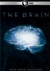 Rent The Brain with David Eagleman on DVD