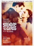 Splendor in the Grass (1961) poster